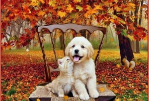 dog-cat-fall-450x307 (1)